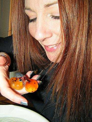 water bubble eye goldfish
