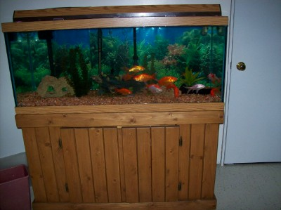 Goldfish pictures and gallery pictures 75 gallon tank for 75 gallon fish tank dimensions